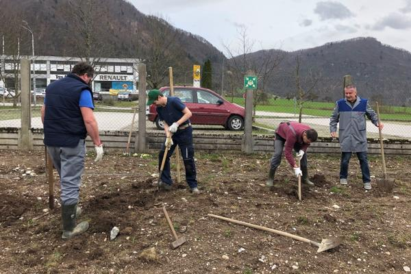 The first fruit trees were planted in Jesenice and Tolmin